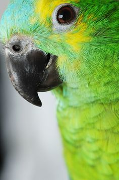 Green bird... Conure?