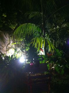 Mi jardín nocturno