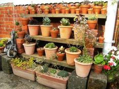 Home made shelves with bricks. Pots of succulents.