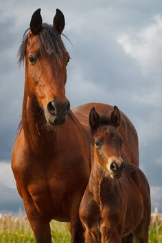 Horses - Proud mare with her pride and joy. - from Rosie Dreams