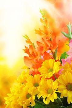 Romantiek romantisch bloemen gladiolen Schitterende bloemen