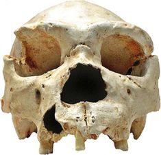 Cranium of Homo heidelbergensis a predecessor to Homo neanderthalensis. Homo Heidelbergensis, Peking Man, Basic Geography, Prehistoric Period, Paleolithic Era, Cro Magnon, Human Evolution, Thing 1, Historia