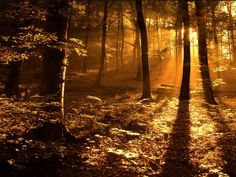 sunset forest | Forest Sunset Wallpaper Beautiful Places, Beautiful Forest, Beautiful Sites, Beautiful Scenery, Beautiful Landscapes, Beautiful Pictures, Magical Forest, Peaceful Places, Wonderful Places