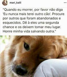 Cachorro que é cachorro, sabe como amar sua família do jeito certo! #nuncadesistadoseucão/cadela