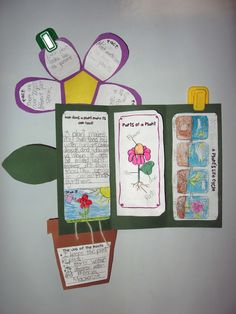 Super fun plant unit foldable!  This unit comes with over 20 activities including labs, vocabulary, writing activities, word wall cards and anchor charts!