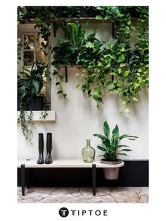 Small Backyard Gardens, Indoor Garden, Garden Plants, Indoor Plants, Mini Gardens, Room With Plants, House Plants Decor, Plant Decor, Apartment Living