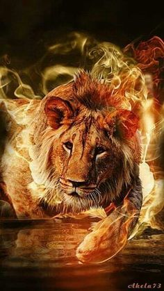 The Lion (Jesus the conquering Lion of the tribe of Judah and the Lamb who was slain). Beautiful Creatures, Animals Beautiful, Beautiful Gif, Beautiful Pictures, Fire Lion, Animals And Pets, Cute Animals, Lion Wallpaper, Tribe Of Judah
