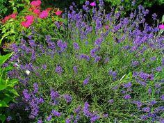 10 pięknych roślin, które warto mieć w ogrodzie Garden Design Pictures, Small Garden Design, Back Gardens, Small Gardens, Garden Club, Plants, Gardening, Home Decor, Decoration Home
