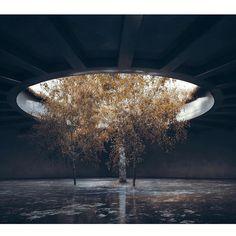지하실 나무 표현 참고 Planetary Folklore : Photo