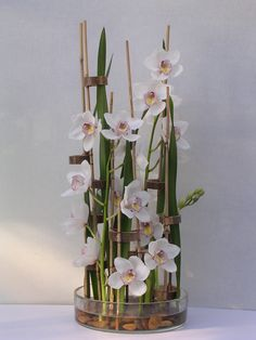 white cymbidium
