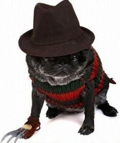 Pets Dressed as Freddy Krueger