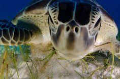 Finalist - Luis Javier Sandoval - 'Dive Buddy'. | 40 Astonishing Photos That Won Awards In 2013