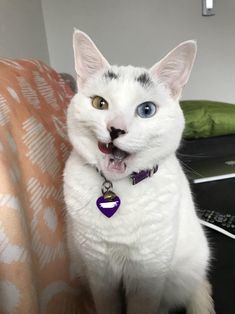 Sybils treat face. http://ift.tt/2mF3k4Y
