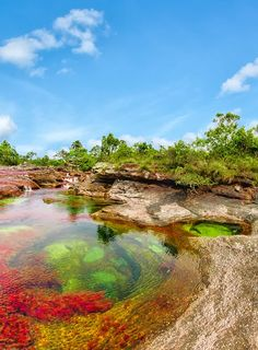 Rio colômbiano com 5 cores é considerado um dos mais belos do mundo; Veja fotos…