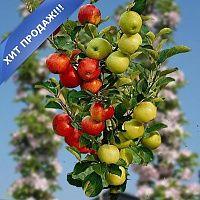 Яблоня колонновидная Чудо-сад