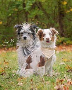 Lamb, Dogs, Animals, Animales, Animaux, Pet Dogs, Doggies, Animal, Animais
