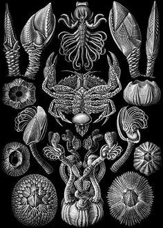 "Ernst Haeckel's ""Kunstformen der Natur"" (Artforms of nature) (1904). https://commons.wikimedia.org/wiki/Kunstformen_der_Natur With zoom: http://algorithmic-worlds.net/Haeckel/haeckel.php"