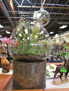 air plant terrarium in candle holder