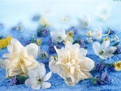 YouTube Cheap Backdrop, Flowers For Algernon, Backdrop Design, Background Information, Make Your Mark, Flower Pictures, Backdrops, Floral Wreath, Wallpaper