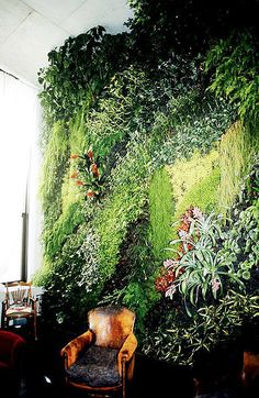 Patrick Blanc overgrows the vertical surfaces of buildings in the most beautiful way. What he creates is far away from any fancy horticultural show, his Vertical Garden could rather be called eco-art, or greener architecture consisting of a variety of plants trailing gently up any interior or outside wall. This image, organic wallpaper.  Amazing organic wallpaper inside a private home.