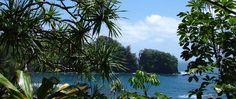 When we go to Hilo - Hawaii Tropical Botanical Garden, A Garden in a Valley on the Ocean