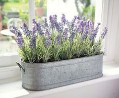 Top 7 Houseplants for Clean Air and a Restful Sleep - House Plants - ideas of House Plants - Top 7 Houseplants for Restful Sleep and Clean Air Herb Garden, Garden Plants, Home And Garden, Water Garden, Garden Web, Flowering Plants, Balcony Garden, Garden Design, Pot Jardin
