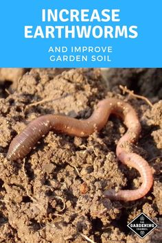 Gardening Compost Earthworms offer many benefits to the gardener. Learn how to increase the number of earthworms in your soil and the benefits of earthworms for healthy soils. Garden Compost, Hydroponic Gardening, Hydroponics, Potager Garden, Garden Landscaping, Organic Soil, Organic Gardening, Vegetable Gardening, Organic Vegetables