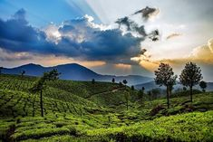 Famed for Neelkurinji blossom, Munnar Tourism enchants you with rows of tea plantations and red roofed colonial cottages that pop up amongst dense greens. Kerala Travel, Kerala Tourism, India Travel, Great Vacation Spots, Vacation Places, Places To Travel, Lakshadweep Islands, Holiday Destinations In India, Munnar