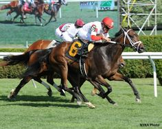Kitten's Dumplings(2010)Kitten's Joy- Granny Fanny By Grand Slam. 3x3 To Sadler's Wells, 4x4x5 To Northern Dancer, 5x5 To Sir Gaylord. 20 Starts 8 Wins 2 Seconds. $797,815. Won 2013 QE II Challenge Cup (G1), Lake George S(G2). Sold To Japan In Jan. 2016.