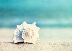 "Summer Photography - seashell conch shell aqua blue beach photography ocean photo sea white wall art prints - 5x7 Photograph - ""Paradise"". $15.00, via Etsy."