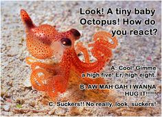 What to do what to do!  #octopus