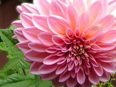 imágenes de flores - exóticas,hermosas y extrañas 1/3 - Taringa!