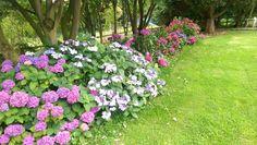 Cristiano Tramontano - Home garden, my relaxing summer corner!