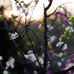 Spring Photography | Flickr - Photo Sharing!