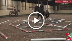In the following video, you can see a kind of training that can help any horse, regardless of discipline.