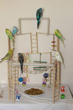 New Play Gym - Page 2 - Talk Budgies Forums I like! I like!!