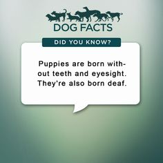 Image result for cool dog facts