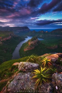 """The Blyde River Canyon, South Africa, is the worlds largest """"green"""" canyon, meaning the largest canyon with flora growing inside. It hosts many amazing species, including aloes growing on the edges of cliffs seen here on a mid-summer evening. - by Mark Dumbleton"""