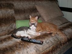 My cats, Sunny and Hector:-)