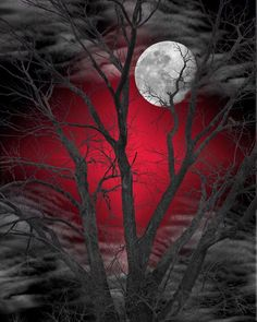 Black White Red Home Decor/Tree Moon/Matted Wall Art Picture in Home & Garden, Home Décor, Posters & Prints | eBay