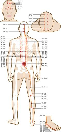 Urinary Bladder Acupuncture Points