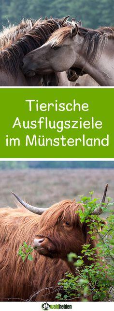Flamingos, Hochlandrinder und Wildpferde im Münsterland. Ja, das gibt es wirklich - hier findest du die tierischen Ausflugsziele im wilden NRW!
