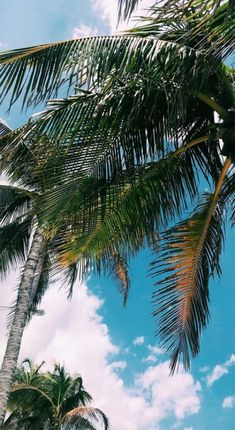 Ideas Travel Wallpaper Iphone Quotes Palm Trees For 2019 Tropical Wallpaper, Summer Wallpaper, Travel Wallpaper, Nature Wallpaper, Wallpaper Backgrounds, Wallpaper Samsung, Aesthetic Iphone Wallpaper, Aesthetic Wallpapers, Fred Instagram