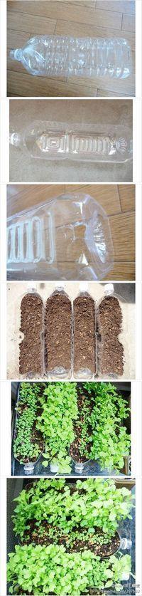 Reciclar botellas de pl stico en unas macetas reciclaje - Tiestos de plastico baratos ...