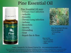 Pine Essential Oil Young Living oils. For more info and to purchase oils www.youngliving.org #1384271 www.facebook.com/younglivingeo