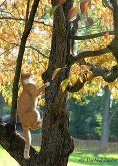 tree chase | by Jen MacNeill