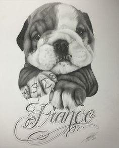 Drawing of my boss's Bulldog puppy.