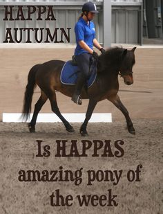 CAN YOU HELP US FIND HAPPA AUTUMN THE FOREVER HOME SHE DESERVES