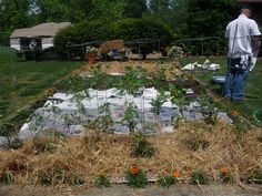 Home gardens are popular in Indiana.  This one utilizes newspaper as a weed barrier and source of nutrients for the soil.