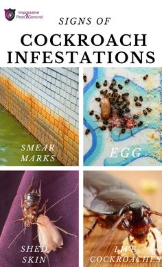 In this Infographic, we have covered the 4 Signs of Cockroach Infestations: Smear Marks, Egg, Shed Skin and Live Cockroaches.  For full blog you can check out our site. How To Get Rid, Pest Control, Brisbane, Home Remedies, Infographic, Egg, Signs, Live, Check